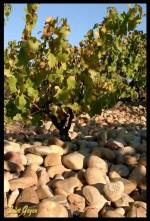 La Vallée du Rhône - Vortrag mit Weinprobe